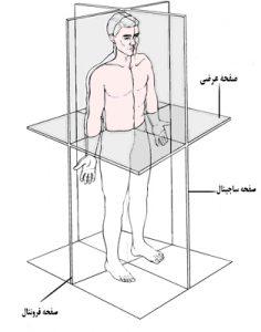 تمرینات کاربردی در هر سه صفحه حرکتی انجام می شود