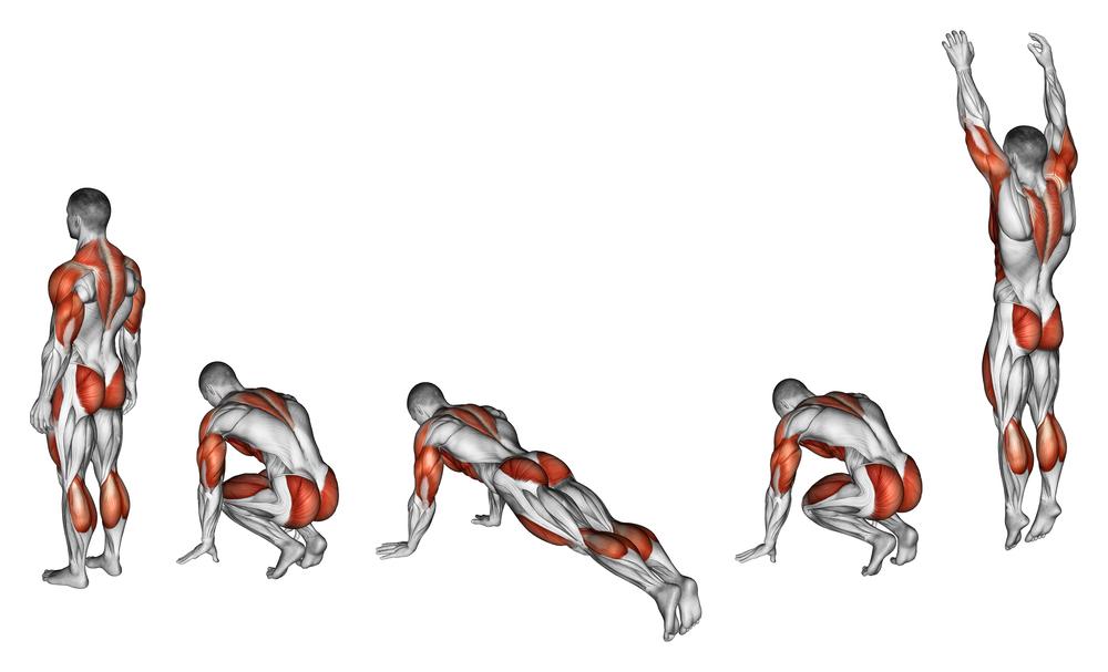 Burpee Muscle involve